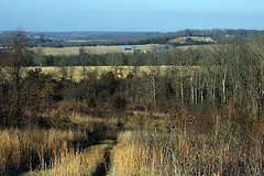 View from Compton Hollow Conservation Area