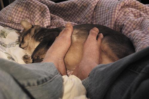Getzger foot warmer