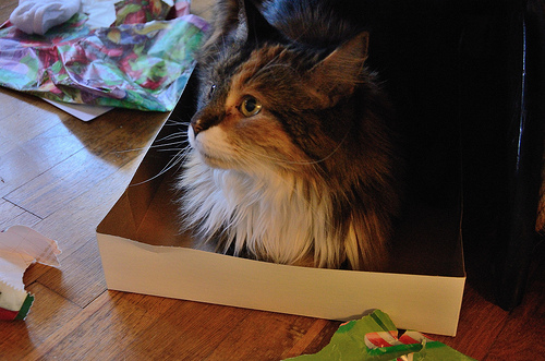 Sprinky finds a nice box to sit in