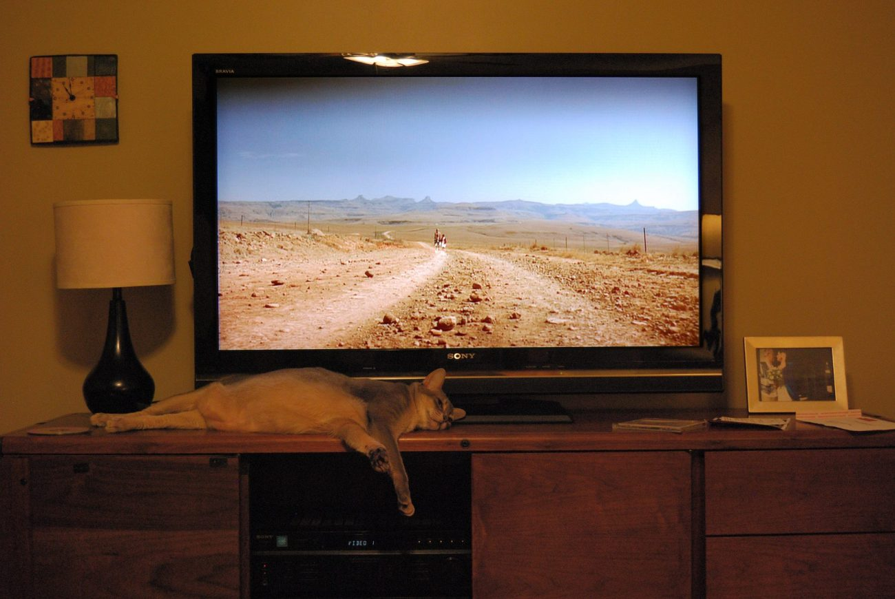 Getzger Cat zonked out in front of the TV.