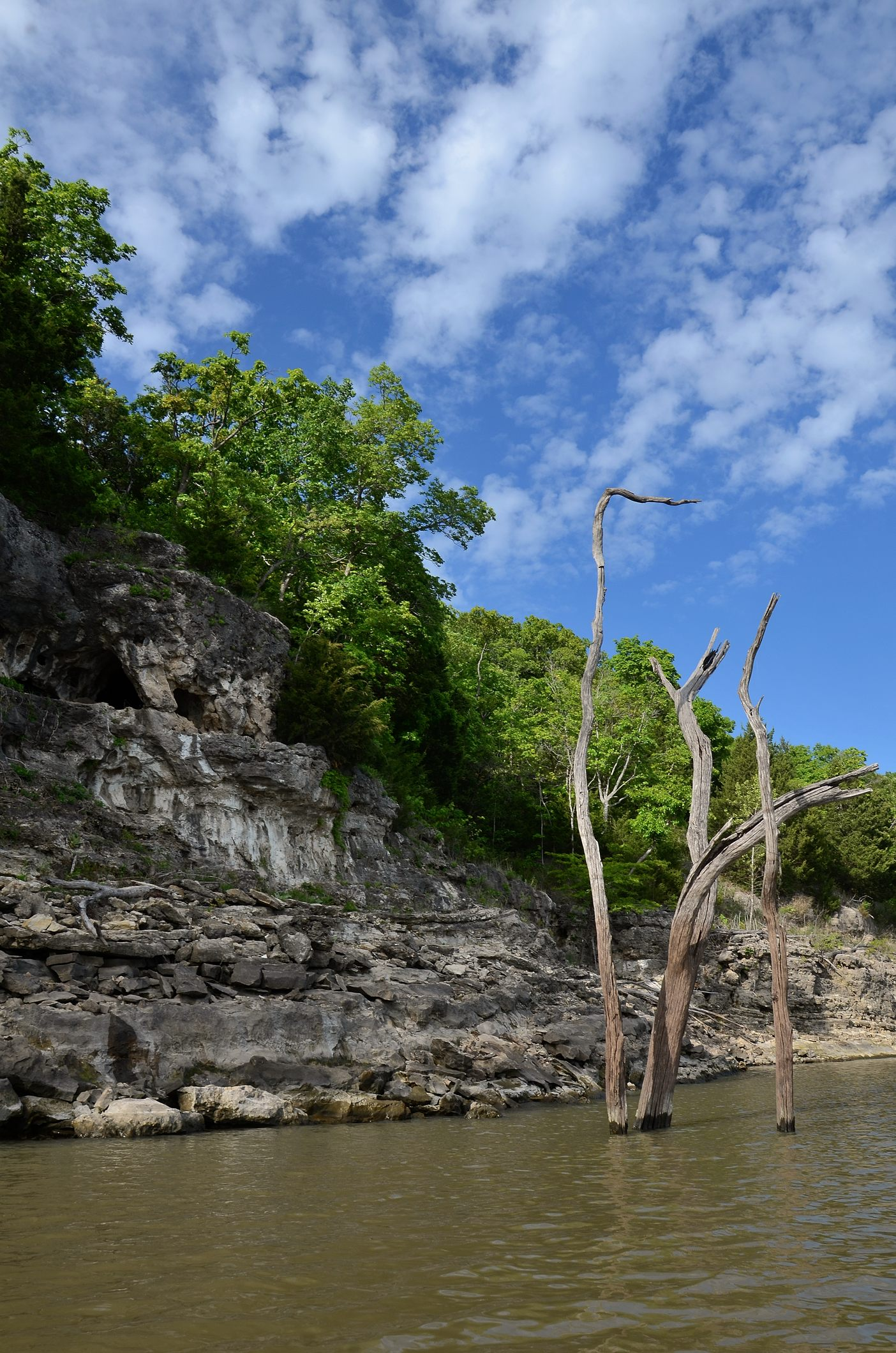 Blufff topped by trees, showing the rough texture, and a dead tree in the water at Lake Truman Missouri