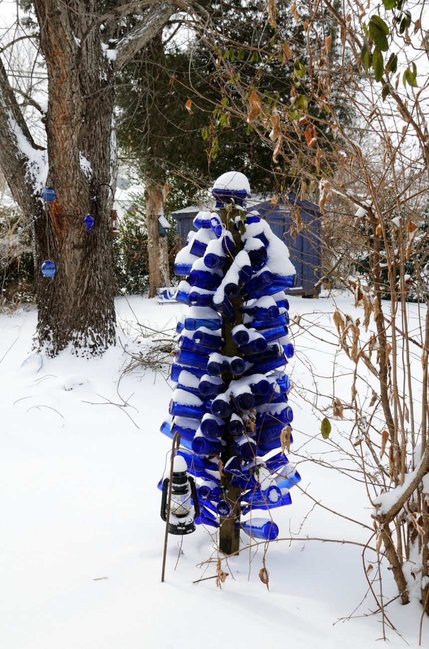 A Blue Bottle Tree covered in snow