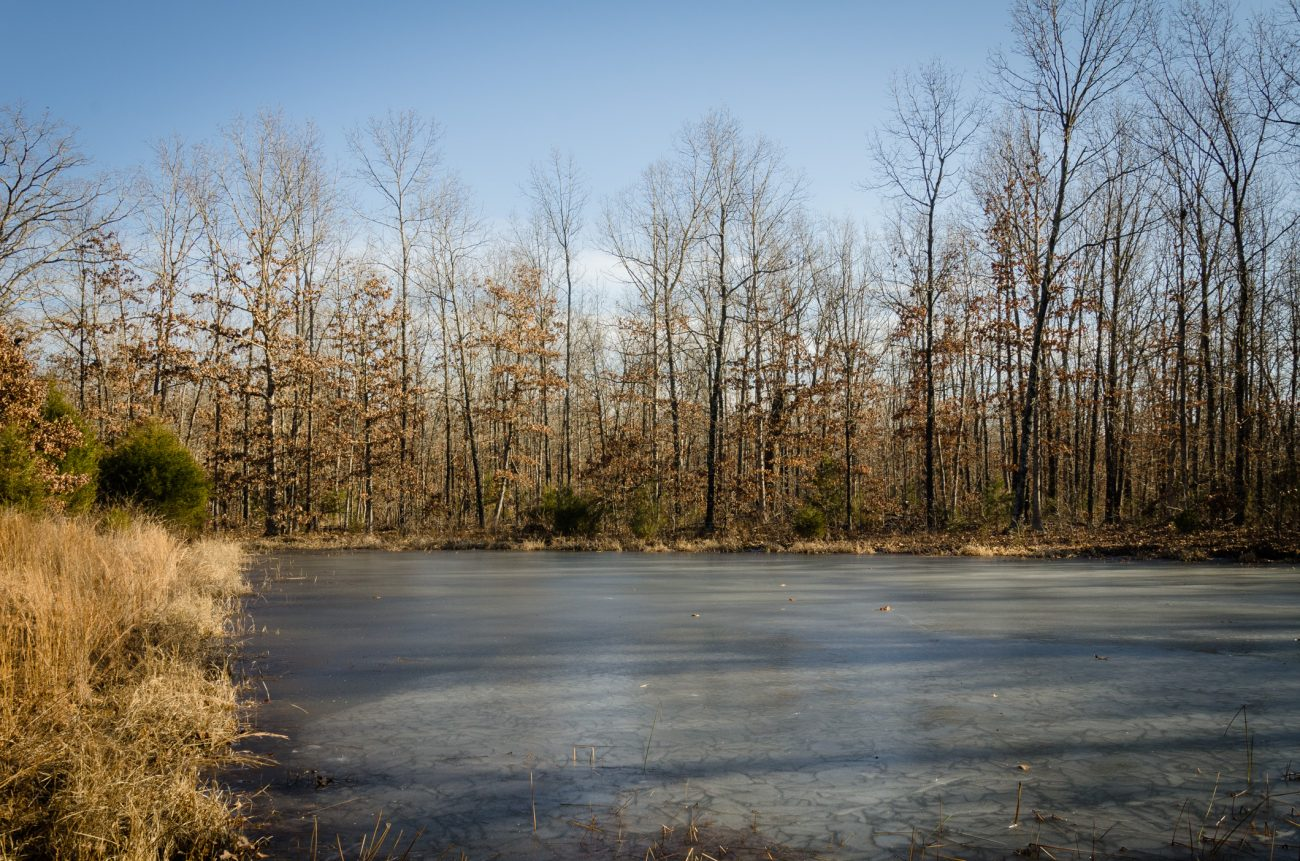 Frozen Stock Pond