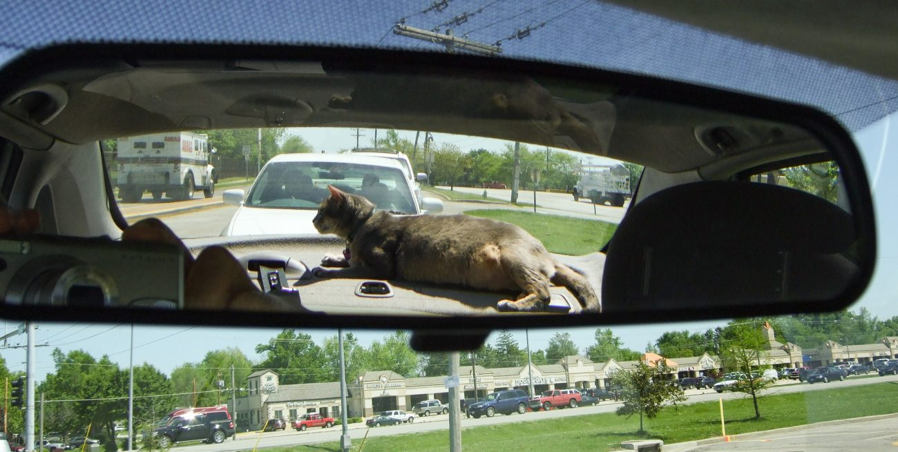 We don't have a nodding dog in our car, we have a nodding cat. His name is Getzger and he's very, very fat.