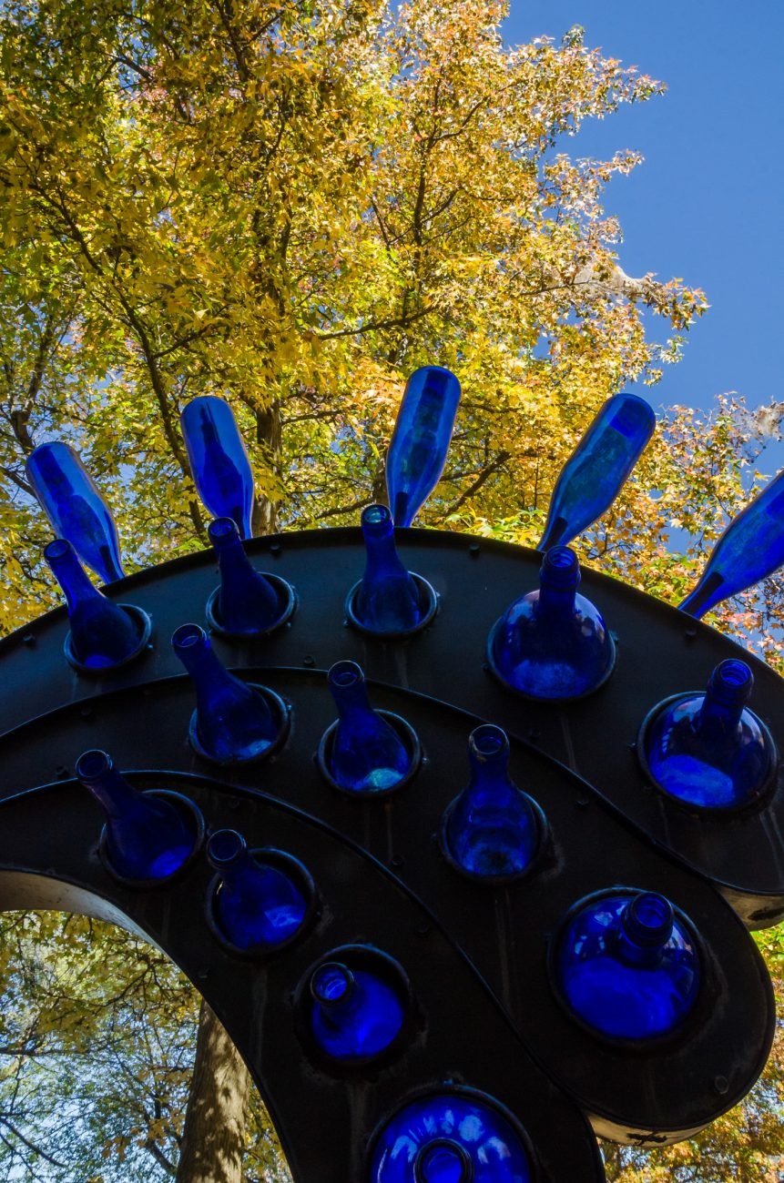 Photograph showing the wonderful blues of our blue bottle tree against the bright fall yellow of a Sweet Gum tree (Portrait orientation)