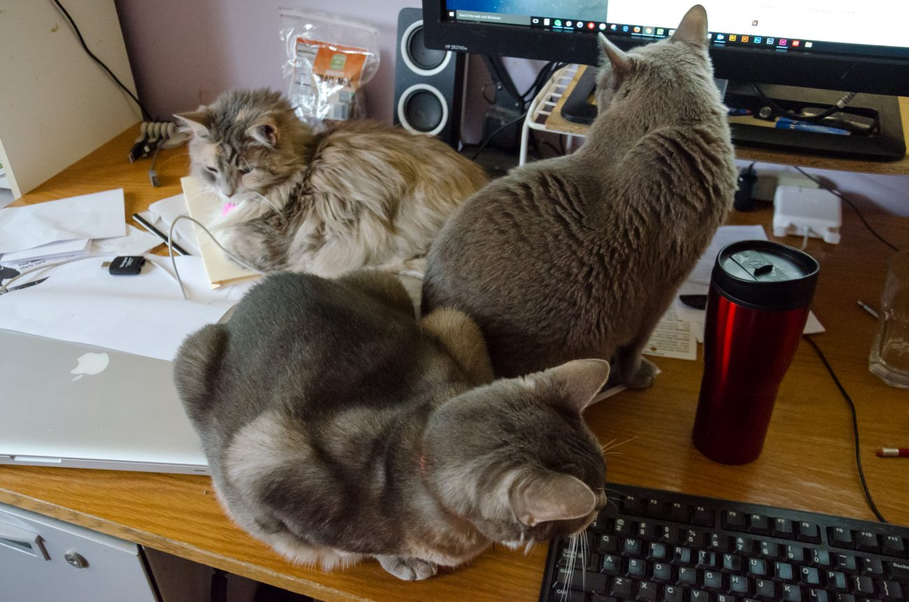 Photograph of three cats sitting on a desk.