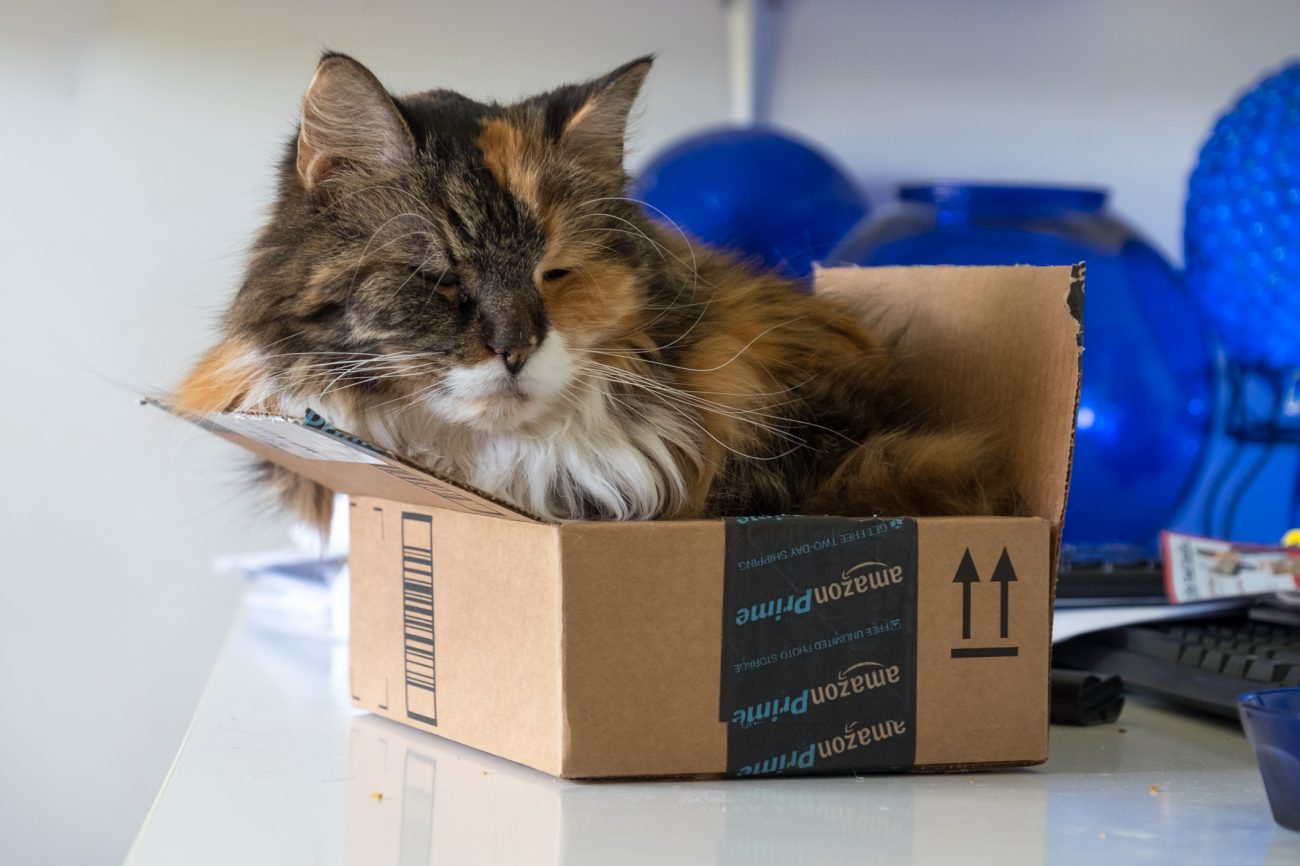 Main Coon Cat - Sprinkles in a small box
