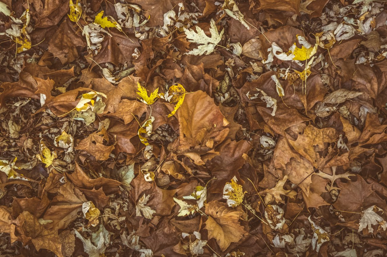 Fall Carpet - full frame version