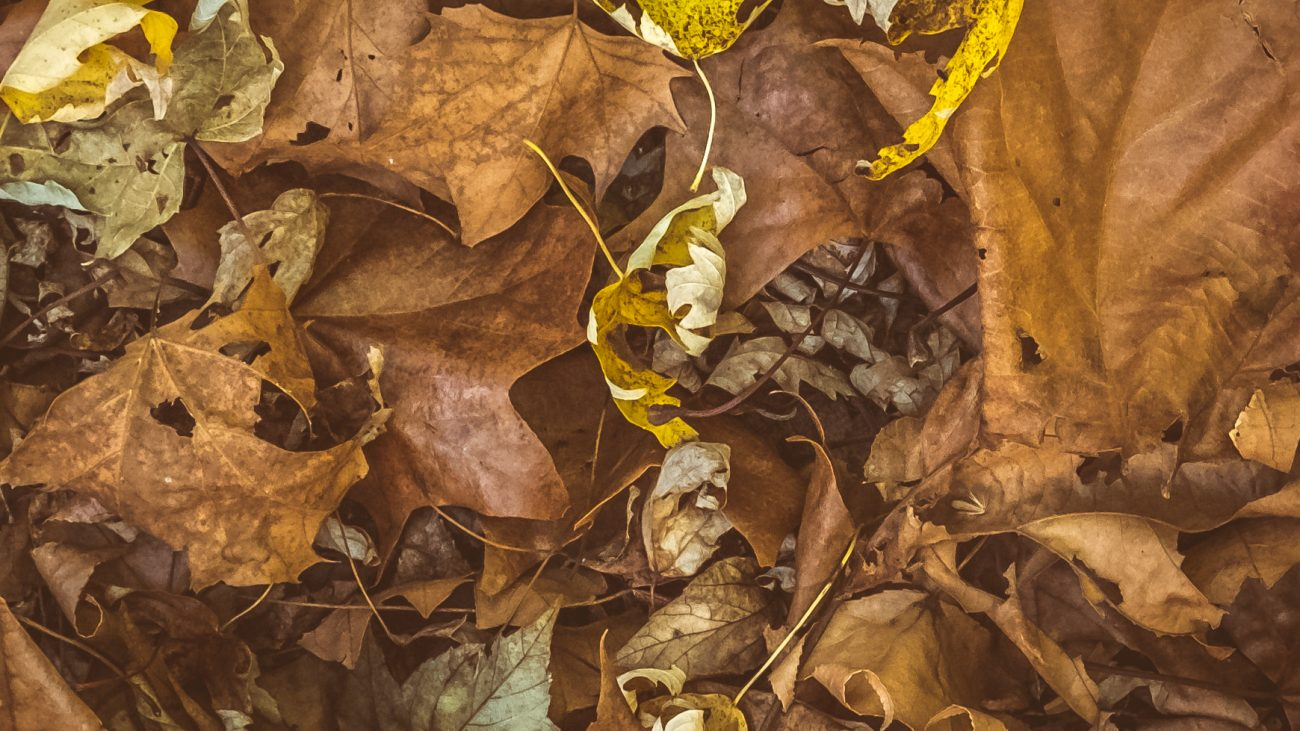 A carpet of full leaves in a painterly view of browns and yellows