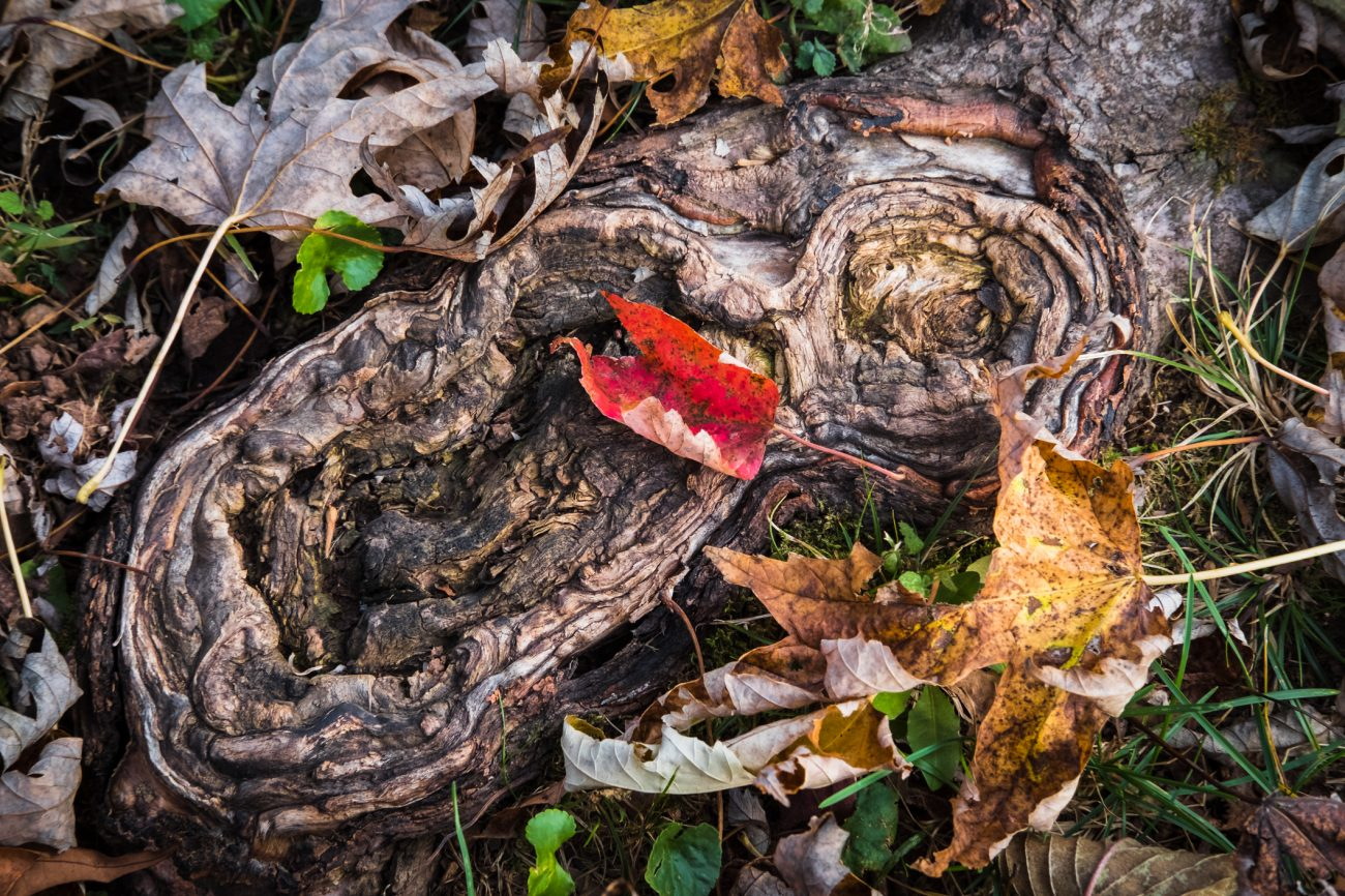 Root and Leaf
