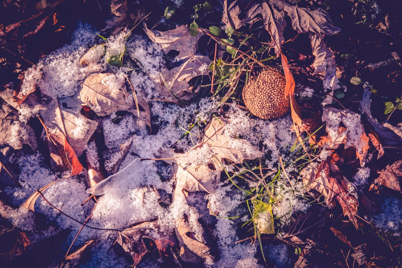 wind-blown snow on the ground with fall leaves