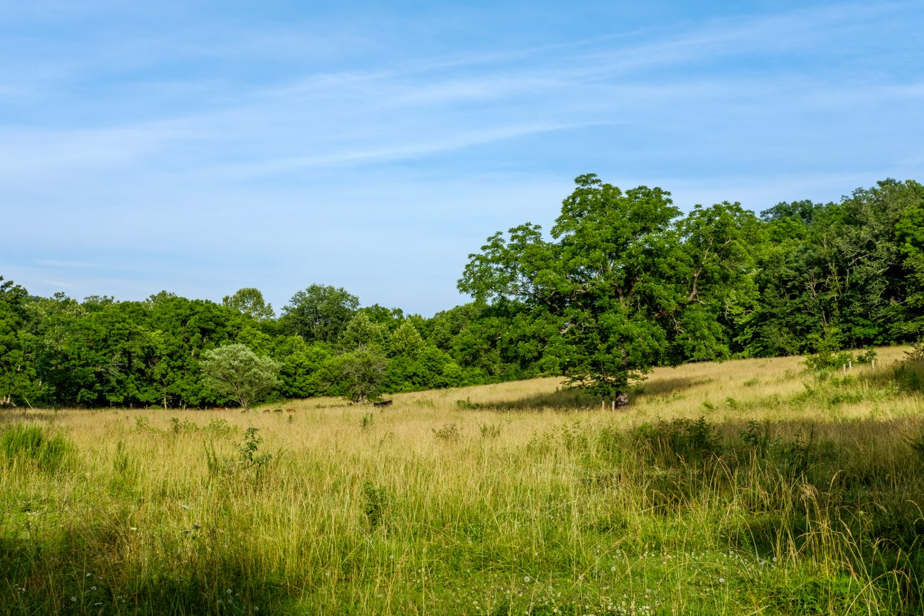 Photograph of an Ozarks farm field