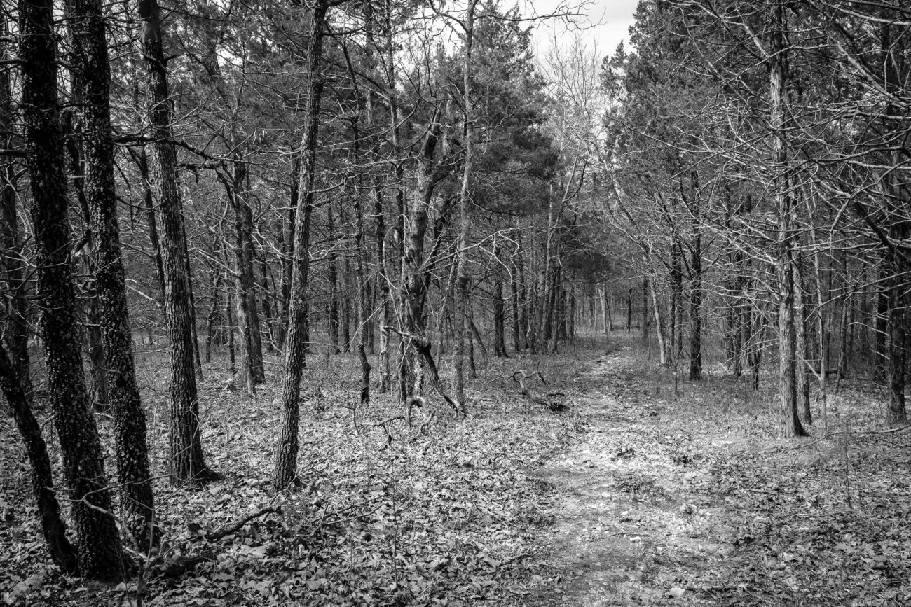 Black and White image of the Pees Hollow Trail , Hercules Glades, running through a wooded area.