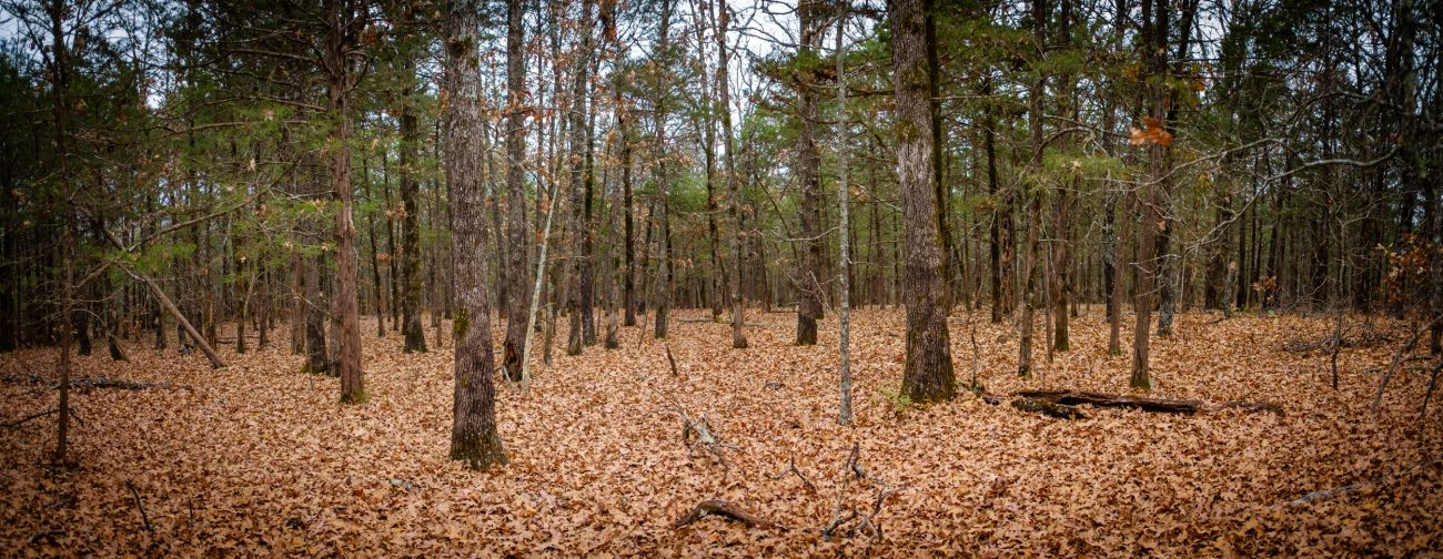 Fall leaves on the forest floor at Hercules Glades Wilderness, Missouri.