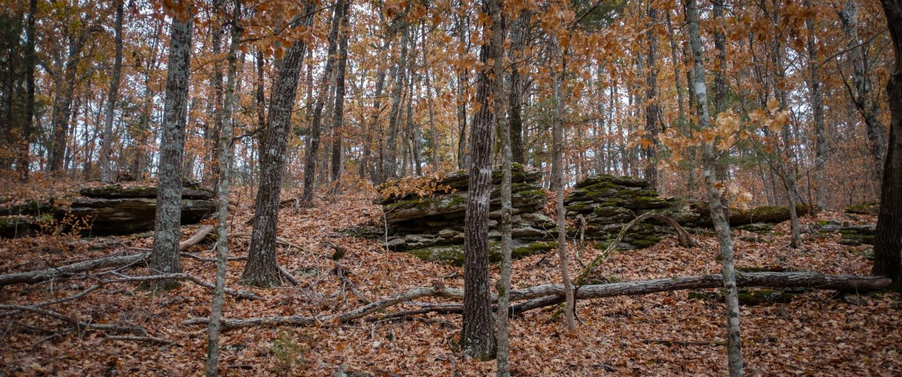 Mark Twain National Forest - Hercules Glades Wilderness, rock outcrop and fall leaves in the forest.