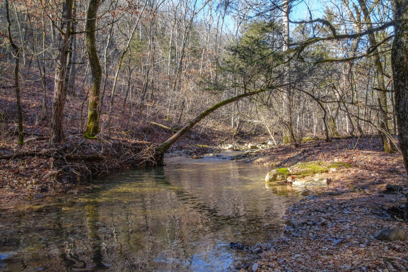Feeder Creek on the Tower Trail (Hollow Route) at Piney Creek Wilderness, Mark Twain National Forest, Missouri.