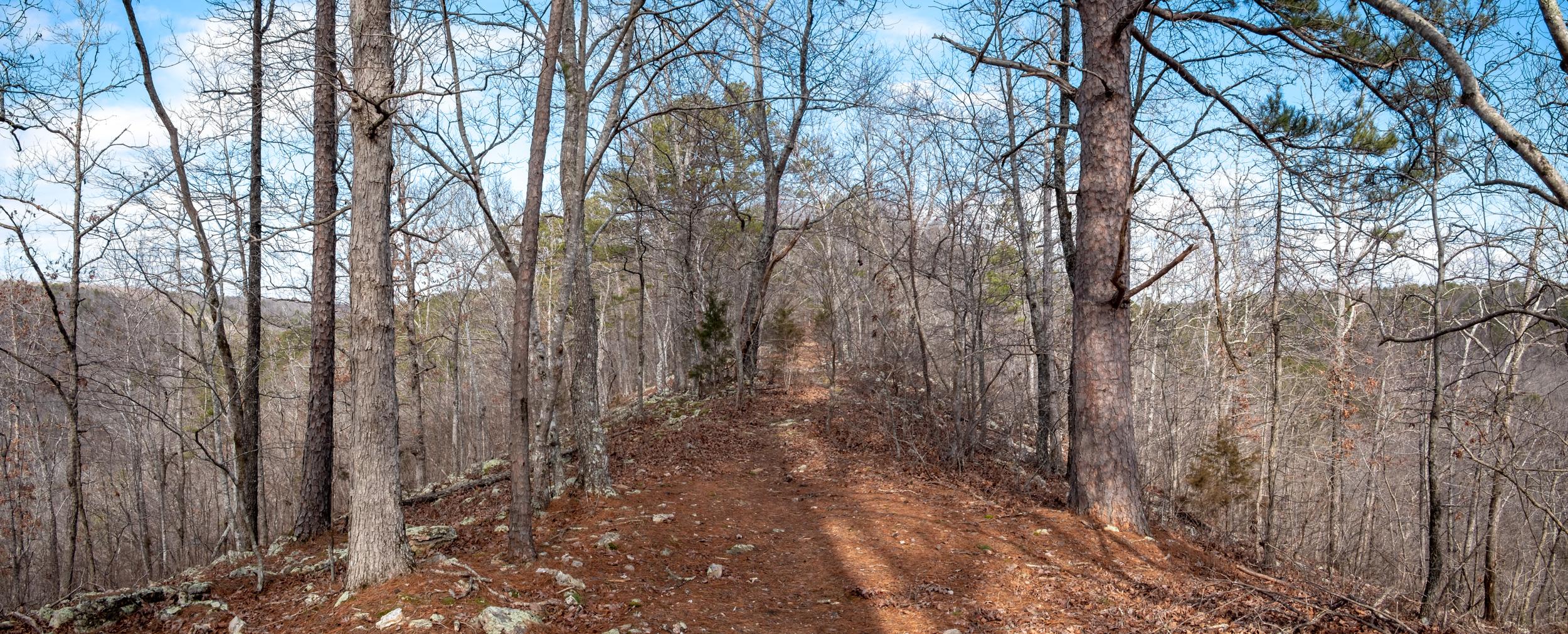 The Devil's Backbone Ridge in the Devil's Backbone Wilderness, Missouri.