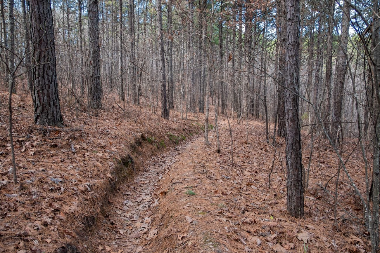 Photograph showing trail erosion on the Berryman Trail, Missouri (December 2020).